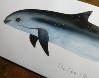 The Sky Whale VIII - Vaquita