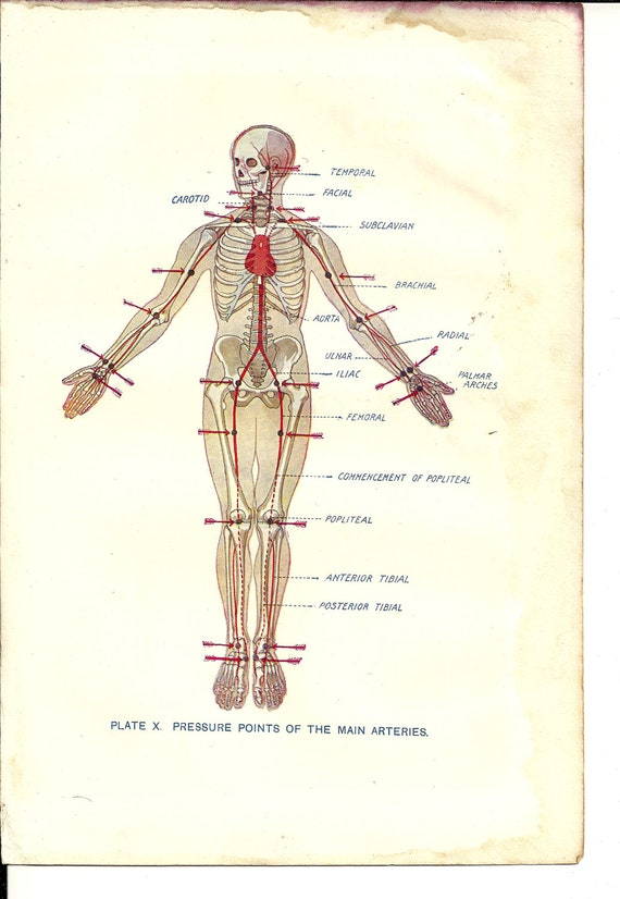 Items Similar To Book Plate Labelled Anatomy Illustration Of Pressue