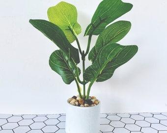 Dollhouse Miniature Fiddle Leaf Fig