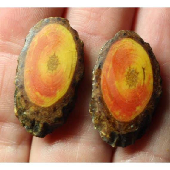 Very Old Vintage Polished Slices of Natural Real Orangy Yellow Wood Slab Set into Screw Back Earrings Folk Art Jewelry