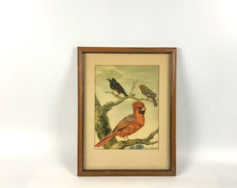 Vintage Framed Red Cardinal Wall Art