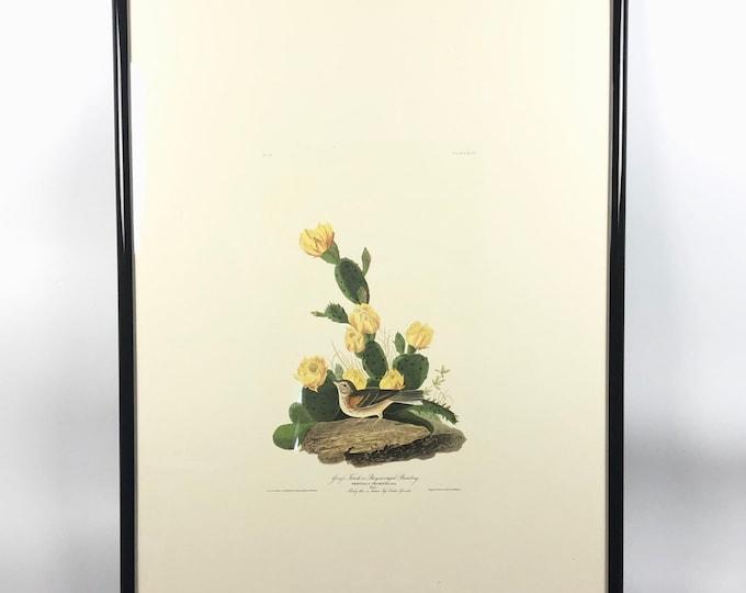 Large J.J. Audobon Art Print- Bird Artwork