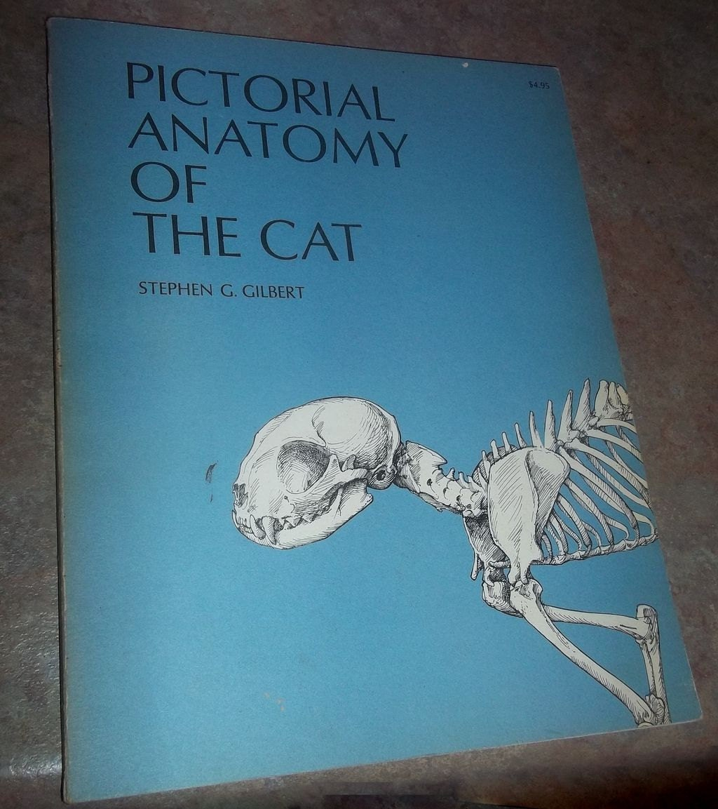 Pictorial Anatomy of the Cat Soft Bound C. 1973