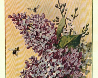 1902 Vintage Illustration, Purple Lilacs and Bees, Flower Arrangement, Antique Print, Digital Download