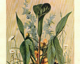 1902 Vintage Illustration, Jack-in-the-Pulpit with daisies and yellow buttercups, Antique Print, Digital Download