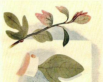 1902 Vintage Illustration, Sassafras Mittens, Antique Print, Digital Download