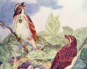 1902 Vintage Illustration, Birds and Nest with Eggs, Antique Print, Digital Download