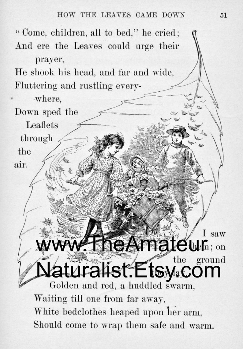 1902 Vintage Illustration Charming Fall Scene with Boy and image 0