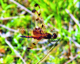 Dragonfly - Digital download photo