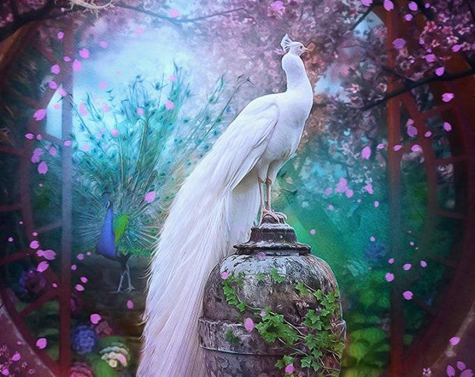 fantasy white peacock garden art print