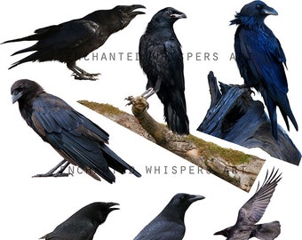 crow overlays, INSTANT DOWNLOAD, raven overlays, Halloween, black birds, crows clip art, crows stock, birds stock, stock photo, PNG crows