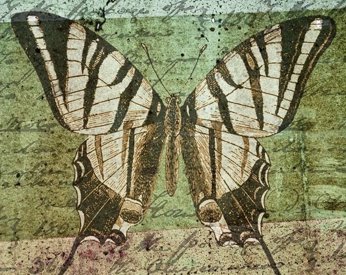 Vintage style large butterlfy art print