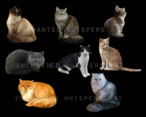 digitally painted cat overlays