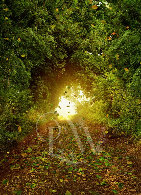 forest digital Photoshop forest background for editing