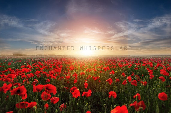 fantasy meadow poppy field background
