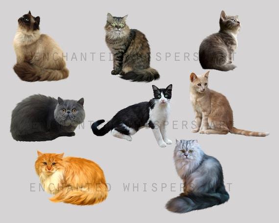 digitally painted cat overlays