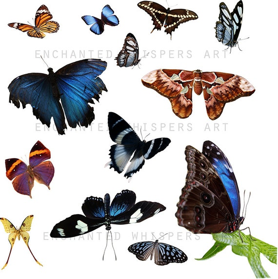 real butterfly overlays for photoshop