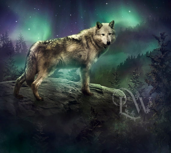 arctic grey wolf art print, Northern lights wall art, wolf digital painting