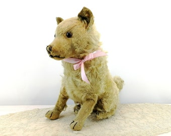 Steiff dog Chow Chow prewar 1928 to 1931 only, large 14 inches sitting