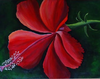 The fiery hibiscus