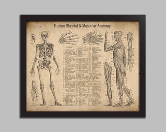 Human Anatomy Art Etsy
