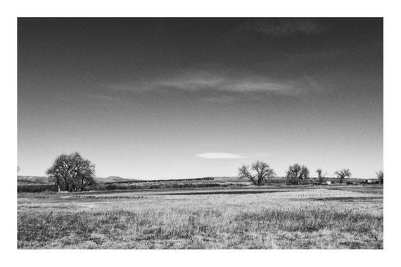 Trees on the Farm,  Black and White Fine Art Photography Print   (Hi-Res Digital Download)