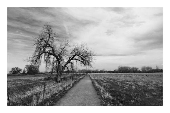 Black and White Farmland Photo Print, Old Tree Path,    (Hi-Res Digital Download)