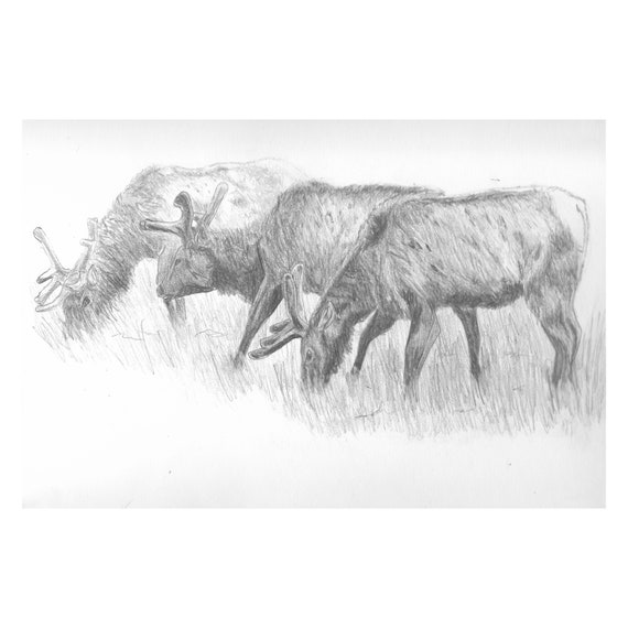 "Elk Brothers (Original) 9""x12"" Wildlife Pencil Sketch 