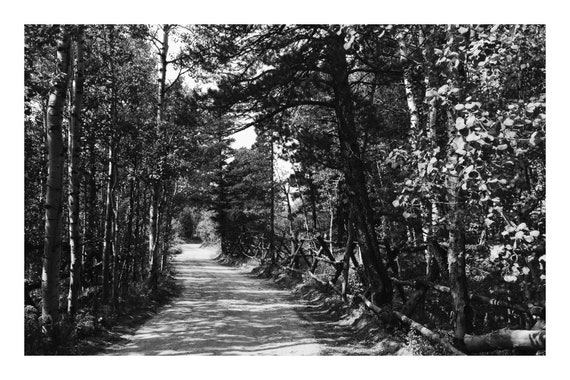 Road In The Woods,  Black and White Fine Art Photography Print   (Hi-Res Digital Download)