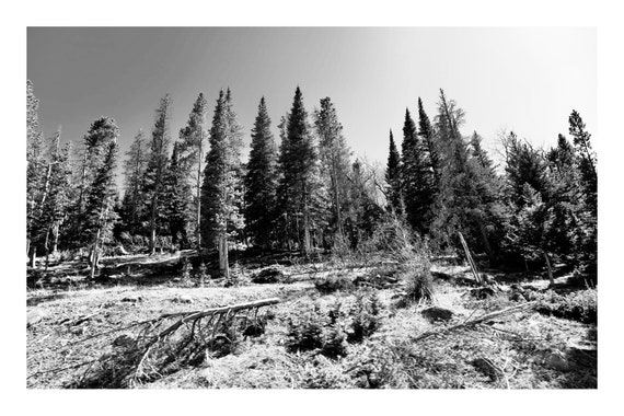 Black and White Mountain Photo Print, Walking Into The Forest,     (Hi-Res Digital Download)