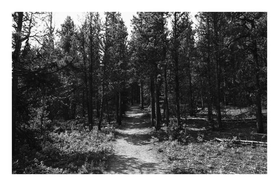 Forest Path,  Black and White Fine Art Photography Print   (Hi-Res Digital Download)