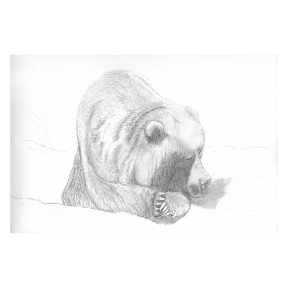 "Sleepy Bear (Original) 9""x12"" Wildlife Pencil Sketch | Graphite | Art | Custom Pencil Art | Wildlife Art | Decor | Minimalist | Gift"