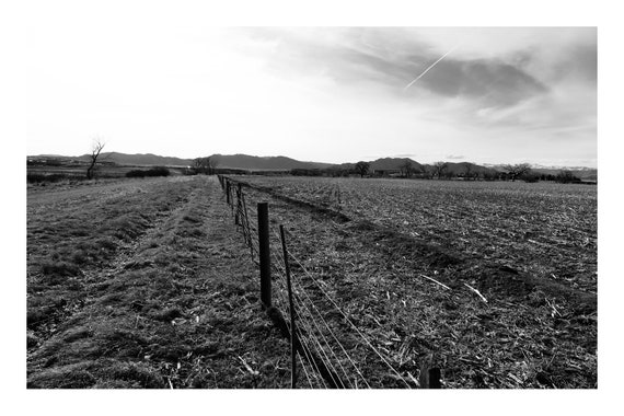 Walking Through The Fields,  Black and White Fine Art Photography Print   (Hi-Res Digital Download)