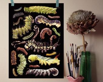 Caterpillars Giclée Print - Bugs Art - Bugs Print - Kids Room Decor - Insect Print - A4 Print - Insect wall art - Nursery Wall Art