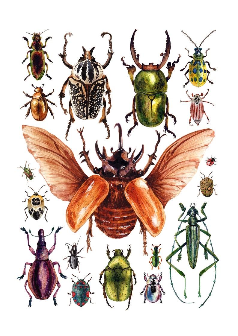Watercolour Sticker iPad beetle sticker Waterproof sticker Bug sticker Insect sticker Green Stag beetle vinyl sticker