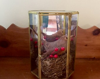 Glass Mirrored Terrarium, Brass Glass Footed Display Box, HInged Door, Carved Bird with Nest, Gift Idea for Bird Lover, Mother's Day Gift