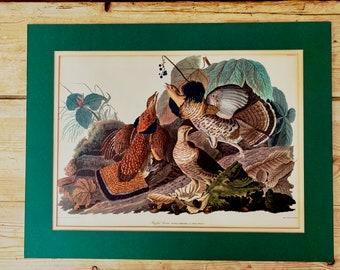 Audubon Print Ruffed Grouse 1960's Reproduction, Vintage John J Audubon Ornithology Art, Rustic Farmhouse Hunting Lodge Decor