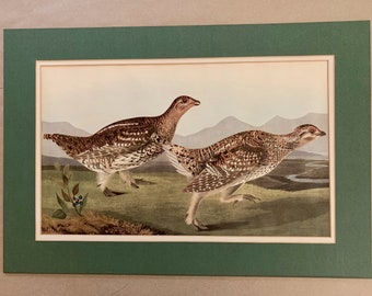 Vintage Audubon Print Sharp - Tail Grous, 1960's Reproduction Ornithology Art, Rustic Woodland Cabin Wall Decor