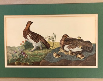 Audubon Print Willow Grouse, 1960's John J Audubon Reproduction, Rustic Cabin Farmhouse Decor, Ornithology Art,