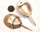 Bronze horseshoe crab bottle opener.