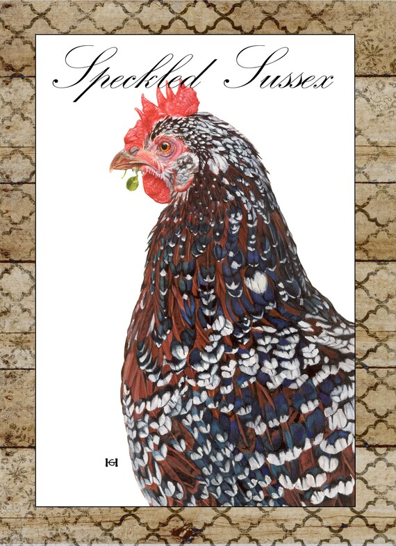Speckled Sussex Hen Notecard Backyard Chickens Collection