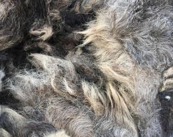 2.50 lbs coated Shetland ( short)