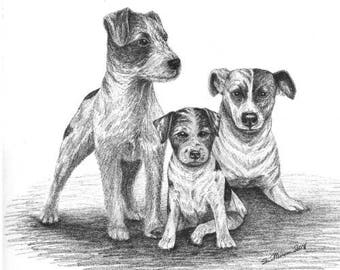 """Jack Russell Terrier. Parson's Terrier, Choice of 3, Signed 8.5"""" X 11"""" Print by Canadian Artist Sheri-Lynn Marean"""