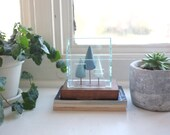 Miniature terrarium structure with evergreen trees - pine trees in small glass-like house - tabletop solarium architecture
