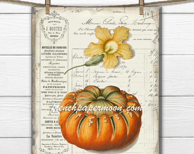 Vintage French Pumpkin Botanical, French Fabric Transfer, Large Image, Printable Botanical Pumpkin, Fall Decor