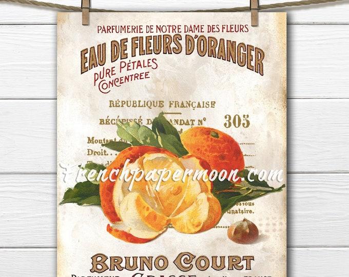 Shabby Botanical Oranges, French Orange Graphic, Vintage Fruit Print, Kitchen Decor, French Pillow Image, Sublimation, Crafts, Transparent