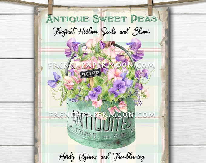 Shabby Sweet Peas, Spring Seeds, Seed Package, Vintage-style, Antique Sweet Peas, DIY Spring Sign, Wreath Decor, Pillow Image, Cards, PNG