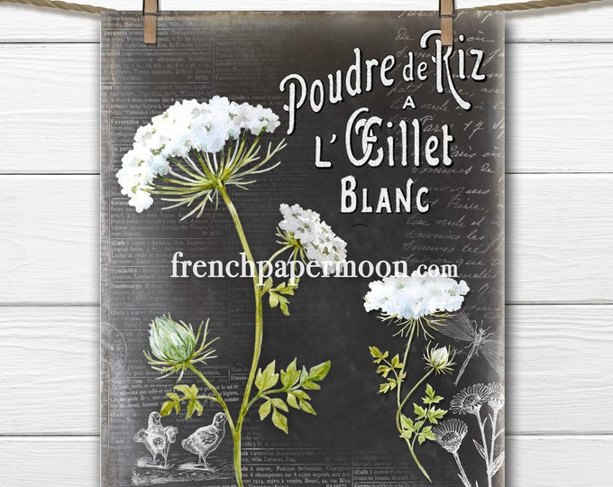 Chalkboard French Perfume Graphic Queen Anne's Lace Botanical Printable Image Transfer French Pillow Image