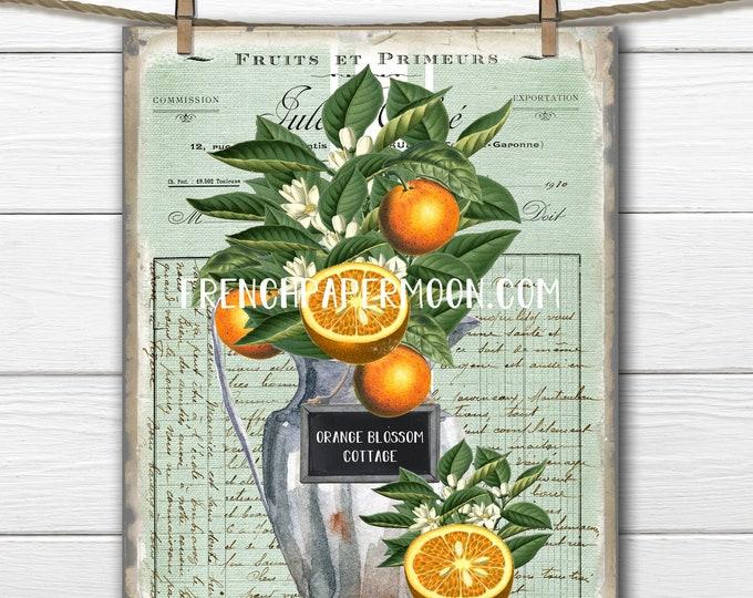 French Fruit Graphic, Vintage Oranges, Orange Blossom, Cut Orange, Pillow Image, Fruit Pillow Image, Fabric Transfer, Digital Image