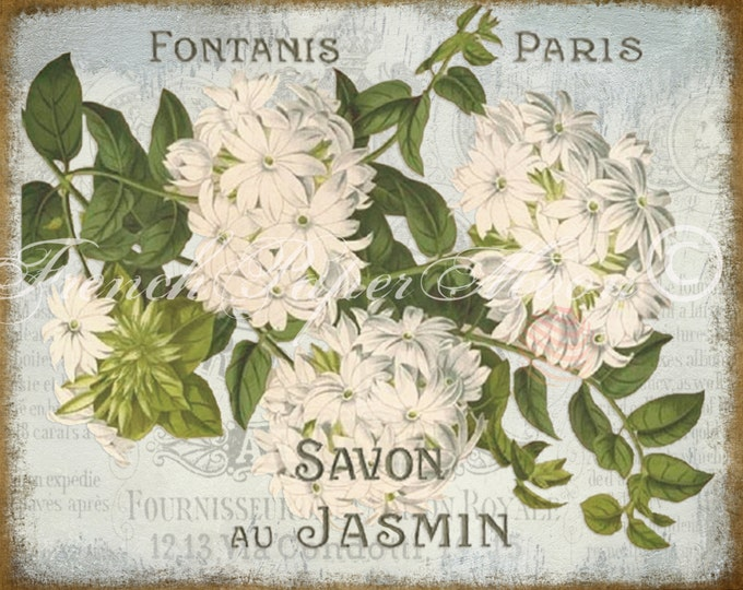 Vintage Digital Download, Shabby French Jasmine Botanical Print, Botanical Flower Download, Digital Jasmine, Savon Printable